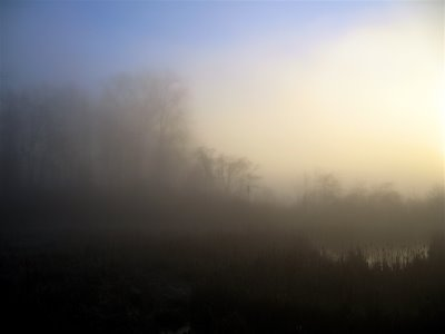fog at dawn photo by Amanda Wald Rachie