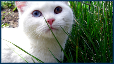 white cat photo by dawgama