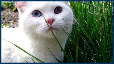 white cat photo by dawgama