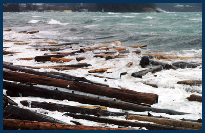 Lummi Island ~ logs at shore